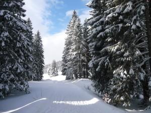 paysage haut Jura