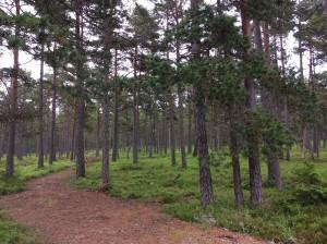 Forêt Dirhami